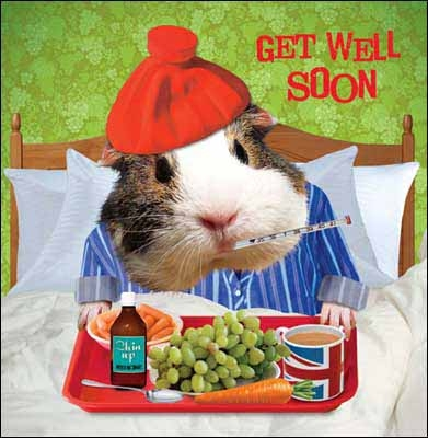 Beterschapskaart Get Well Soon Zieke Cavia Muller Wenskaarten