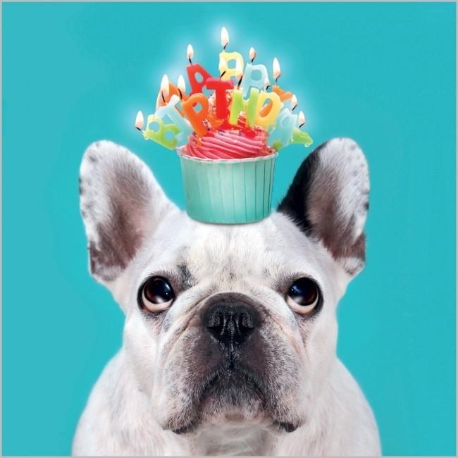 verjaardagskaart rapture - happy birthday - hond met cupcake