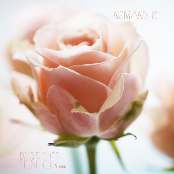 wenskaart - niemand is perfect... - roos