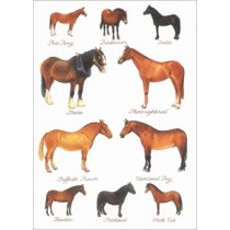 wenskaart clanna cards -  shire - thoroughbred - suffolk punch - cleveland bay - paarden