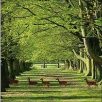 wenskaart  woodmansterne - herten in tatton park engeland