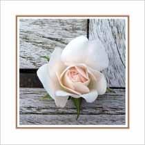 Citaten Over Rozen : Rozen bloemenkaarten blanco muller wenskaarten online kaarten