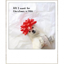 kerstansichtkaart instagram - all I want for christmas is you! - hond met rode strik