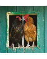 wenskaart rapture - kippen