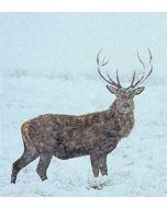 8 luxe kerstkaarten woodmansterne - hert in de sneeuw