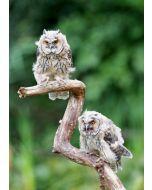 ansichtkaart eye-comm - uilen