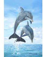 3d ansichtkaart - lenticulaire kaart met 2 afbeeldingen - dolfijnen