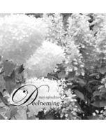 condoleancekaart - met oprechte deelneming - hortensia zwart-wit