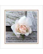 bloemenkaart muller wenskaarten - roze roos