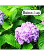 beterschapskaart tekstvak - beterschap - hortensia