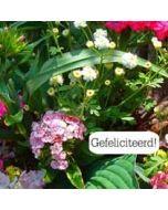 felicitatiekaart tekstvak - gefeliciteerd! - bloemen