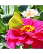 bloemenkaart - vlinder op bloem - geel, roze