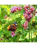 bloemenkaart - vlinder op bloem - oranje, paars