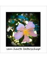 beterschapskaart - van harte beterschap - clematis bloem