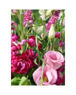 grote wenskaart A4 - roze bloemen