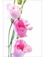 grote bloemenkaart A4 - roze bloem