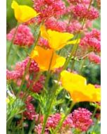 grote kaart A4 - bloemen rood geel