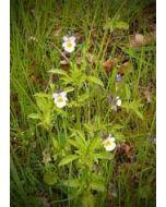 grote bloemenkaart A4 - viooltjes in het gras