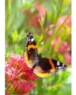 grote kaart A4 - vlinder op bloem