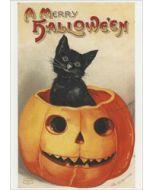 a merry halloween - retro ansichtkaart  - zwarte kat in pompoen