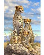3d ansichtkaart - lenticulaire kaart - cheetah