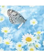 wenskaart second nature - madeliefjes en vlinder