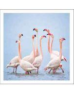 wenskaart woodmansterne - flamingo's