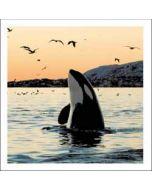 wenskaart woodmansterne - orca