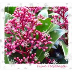 10 kerstkaarten - fijne feestdagen - plant