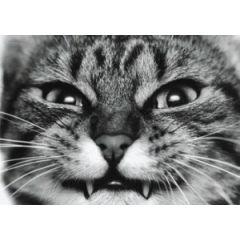 ansichtkaart  - boze kat