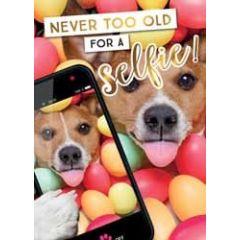 verjaardagskaart - never too old for a selfie! - hond