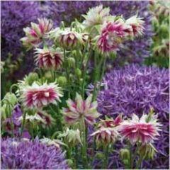 bloemenkaart - allium en wilde akelei