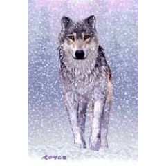 3d ansichtkaart - lenticulaire kaart - wolven en wolf