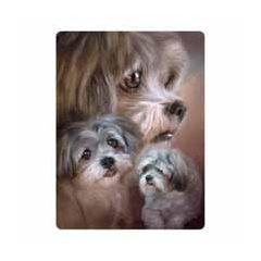 3d ansichtkaart - lenticulaire kaart - lhasa apso honden
