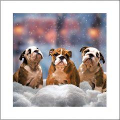 luxe kerstkaart woodmansterne - drie honden