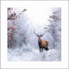 luxe kerstkaart woodmansterne - hert in winters bos