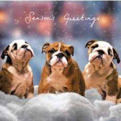 5 kerstkaarten woodmansterne - seasons greetings - honden