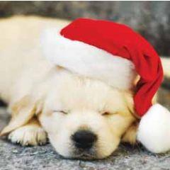 5 kerstkaarten woodmansterne - hond met kerstmuts