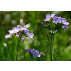 ansichtkaart - blauwe bloempjes