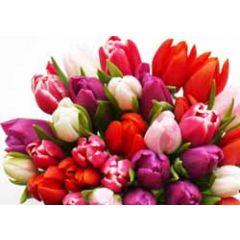 ansichtkaart - bos tulpen