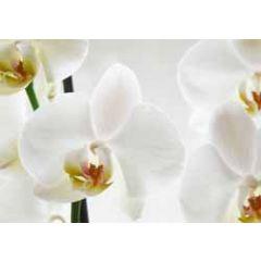 ansichtkaart - orchidee