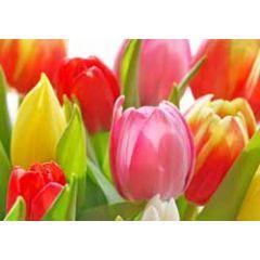 ansichtkaart - tulpen roze geel