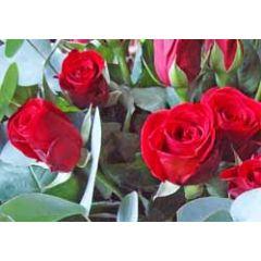 ansichtkaart - rode rozen