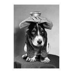 ansichtkaart  zwart-wit 1950 - hond met kruik