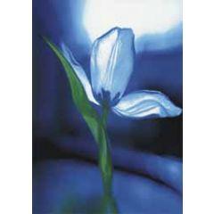 ansichtkaart - blauwe tulp