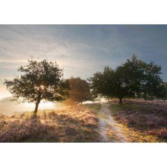ansichtkaart eye-comm - nationaal park Veluwezoom