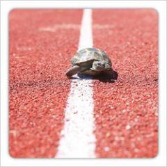 vierkante ansichtkaart met envelop - schildpad over de finish