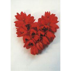ansichtkaart tjalf sparnaay - i love tulips - tulpen
