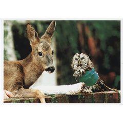 ansichtkaart - hert en uil