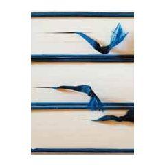 ansichtkaart bildreich - boeken
